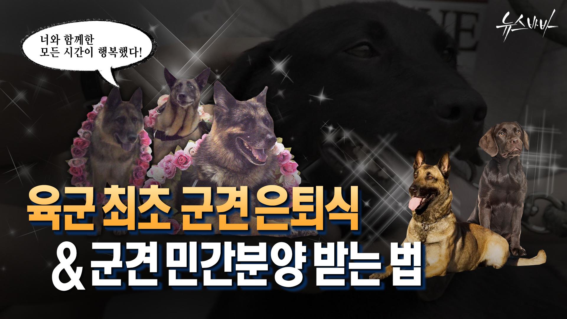 [뉴스바바]'네발의 전우' 군견의